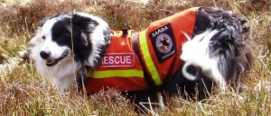 A search and rescue dog in their working vest.