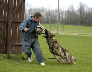 Schutzhund Training with a German Shepherd