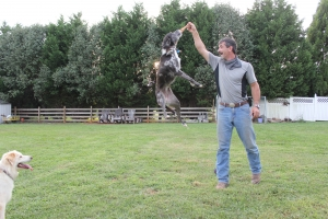 Piper leaping